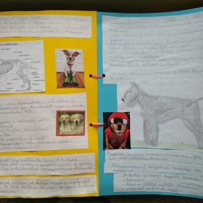 4/b Album az állattartásról projekt